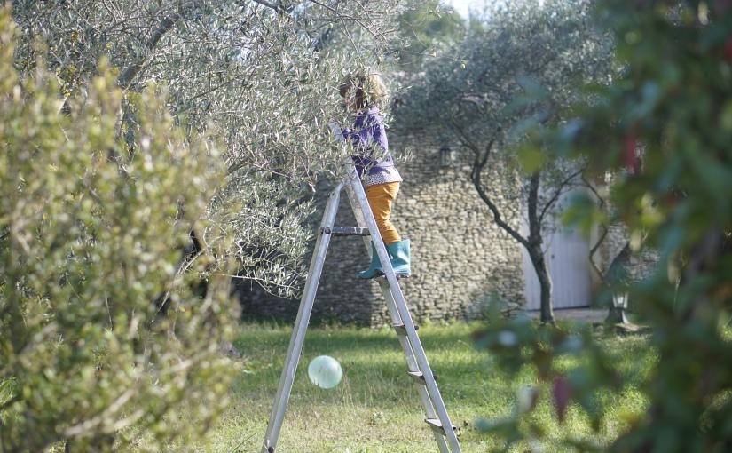 Notre première récolte d'olives!